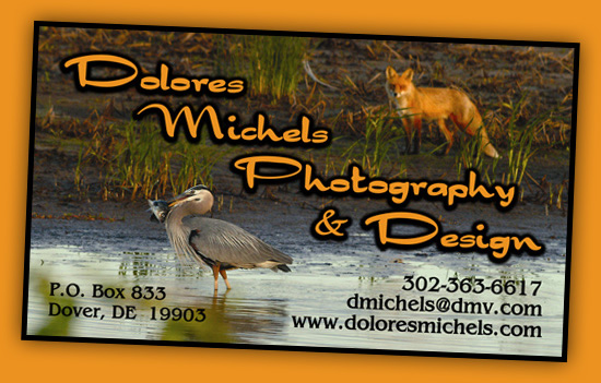Dolores Michels Photography & Design